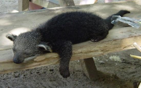 Sleeping Bear Cat