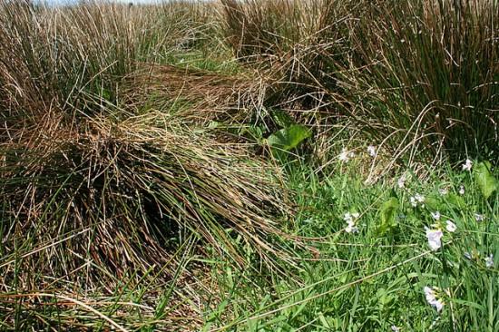 Hare's nest